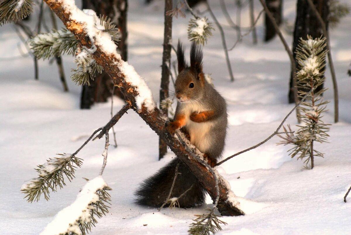 Картинка зима в лесу с животными