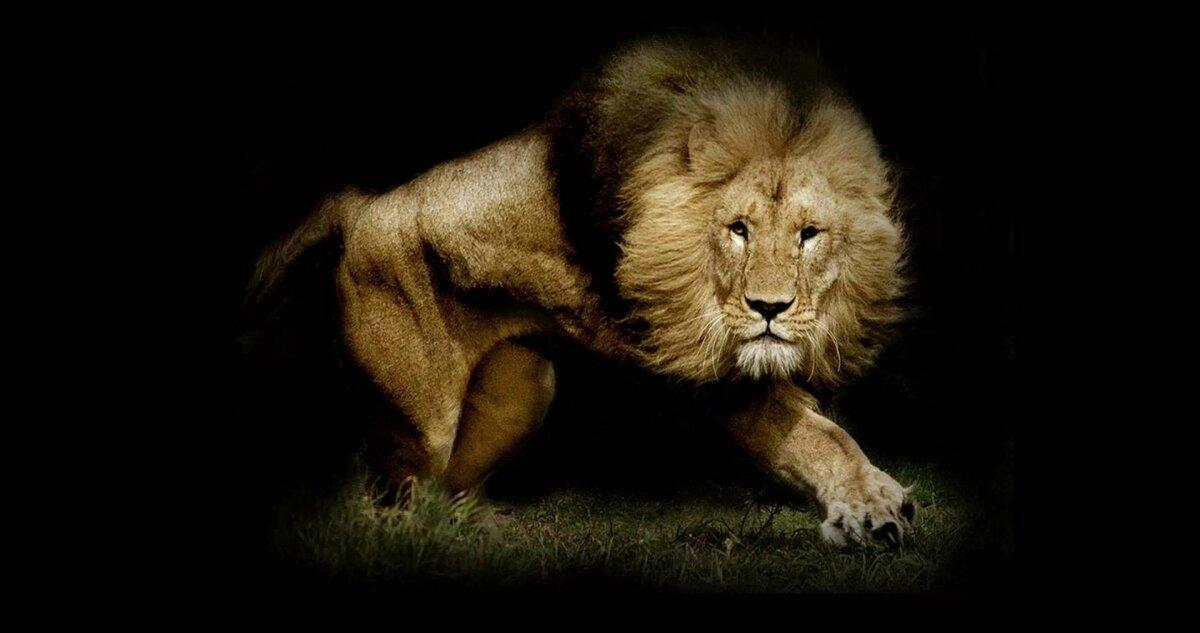 Картинки злых львов на рабочий стол
