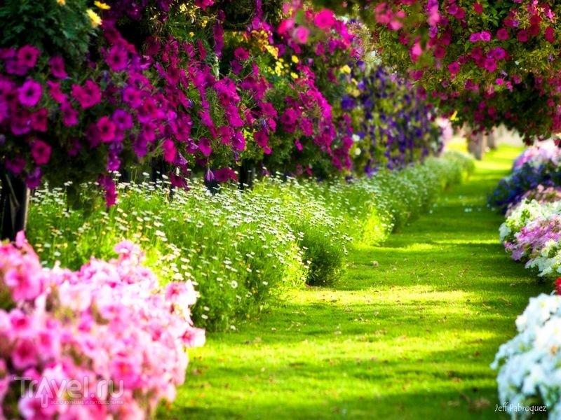 красивый сад с цветами фото первом членике