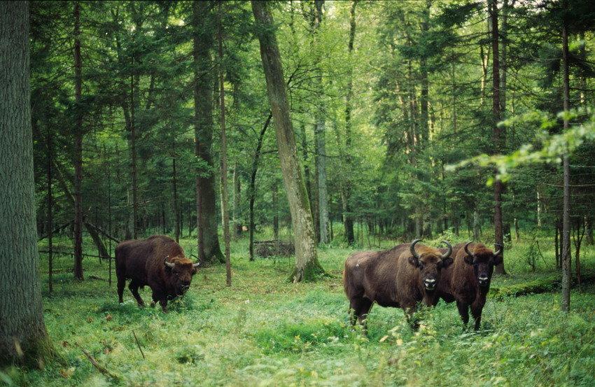 Фото животных широколиственных лесов