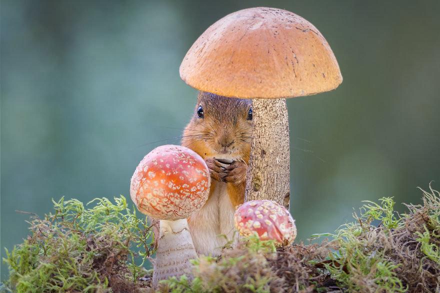 Днем рождения, прикольные картинки грибы