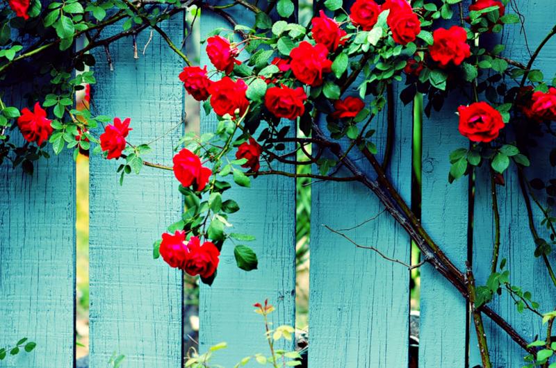 всей картинки из цветов на забор квадратной