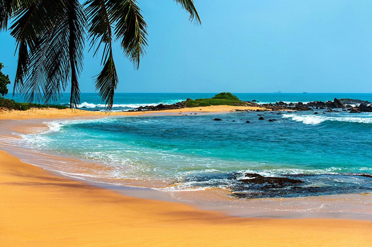 Картинка с океаном и пальмой, меня любишь юмор