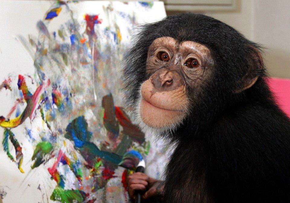 Картинки моя обезьяна ярославле появились