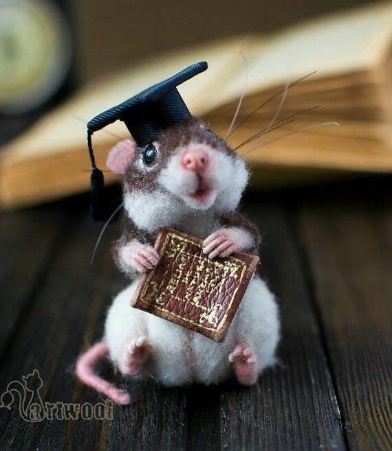 Мышонок бакалавр