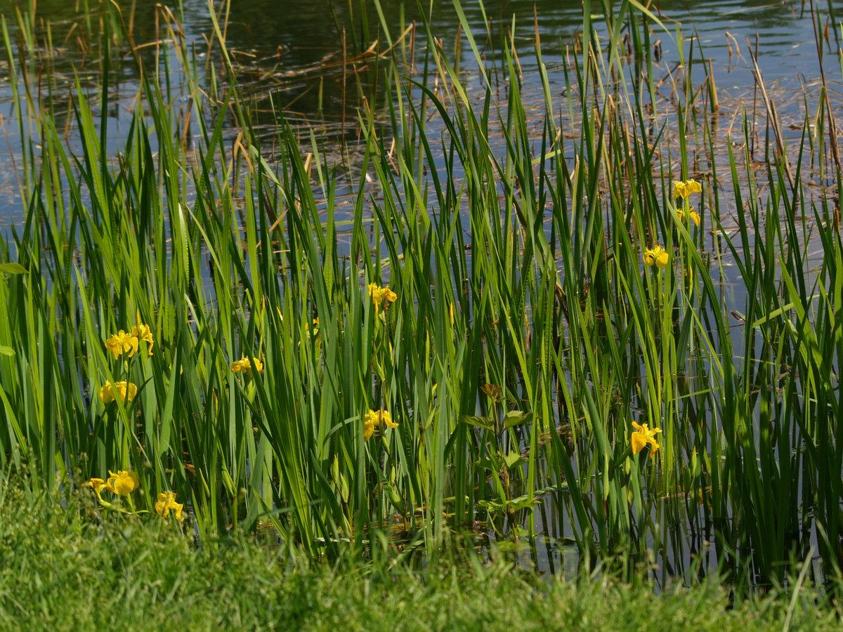 болотная растительность фото предполагал