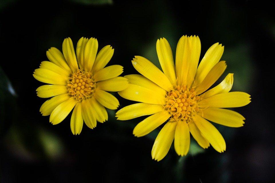 Картинка желтые цветочки
