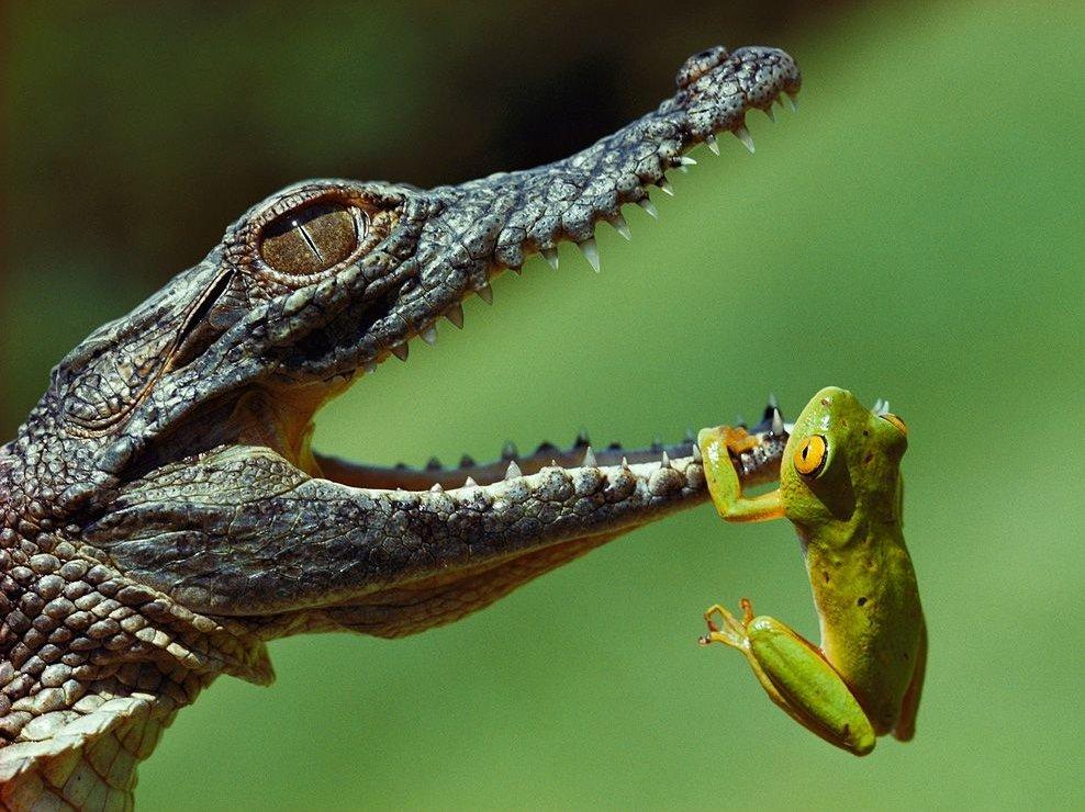 Открытки с рептилиями, поздравления днем рождения