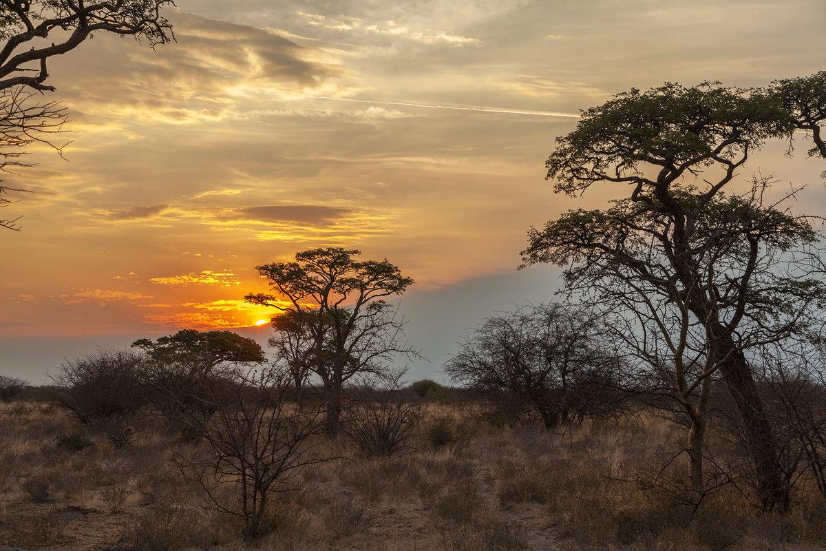 природе африканские пейзажи картинки кто-то