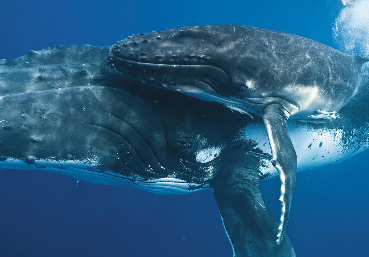 Картинки с китами, днем рождения женщине