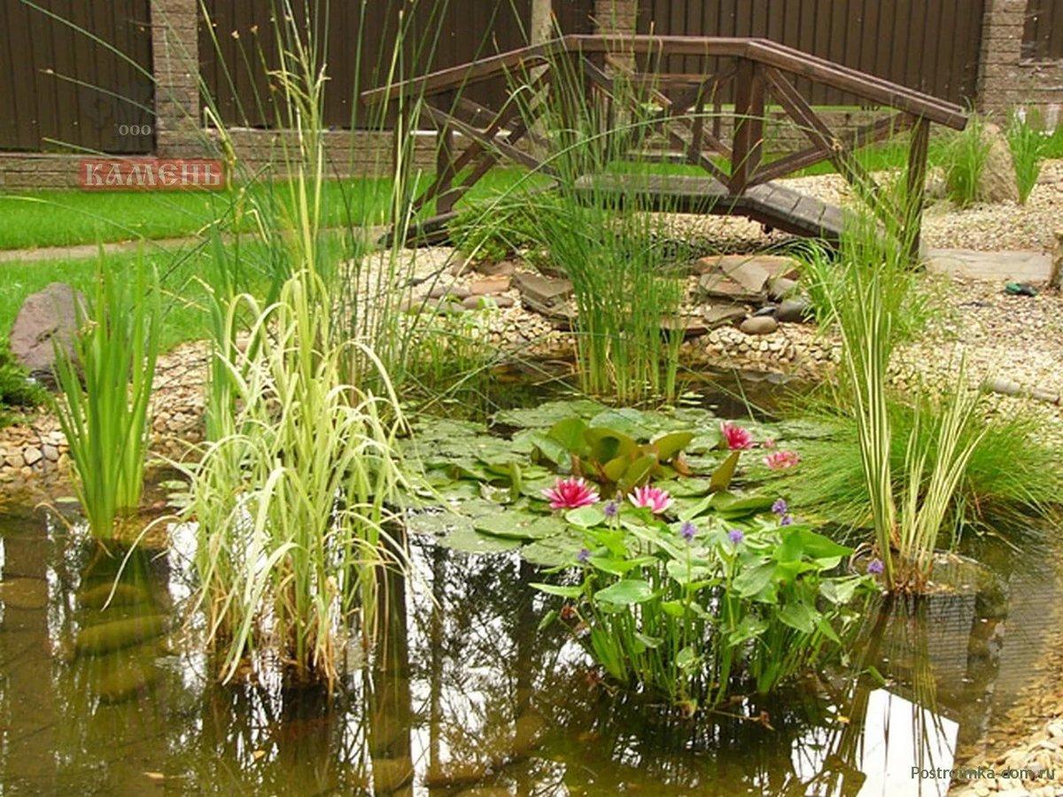 водные растения на даче