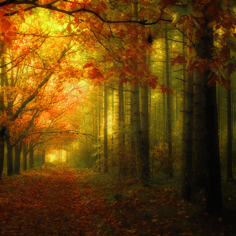 Вечер осень