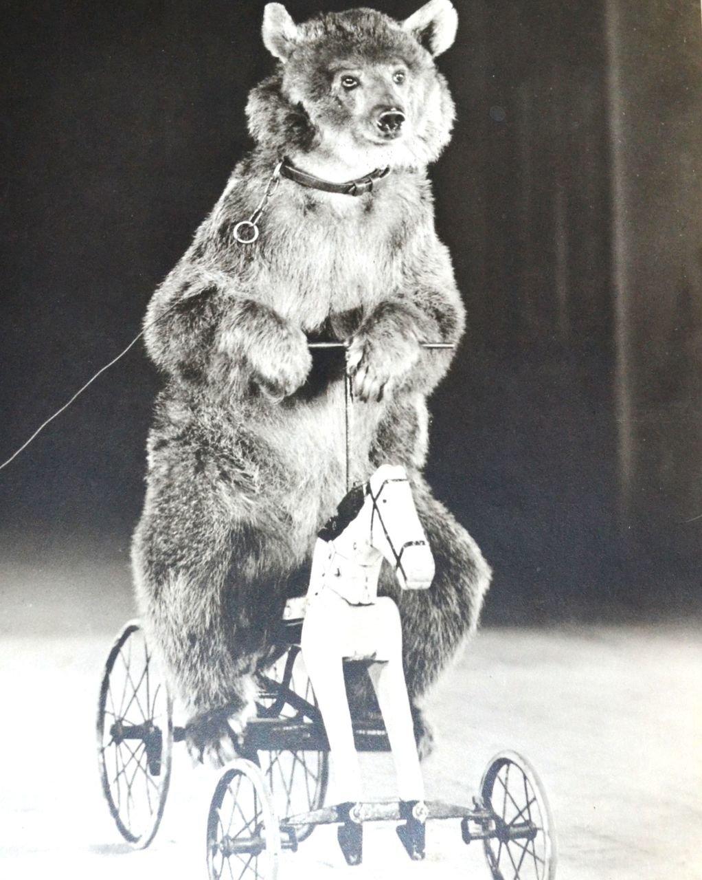 Медведь ретро фото