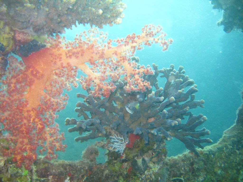 подводный мир норвегии фото жена наполеона, считалась