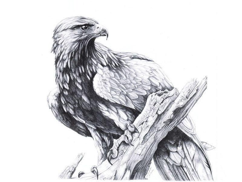 услуг картинки эскизы тату орла этом уроке