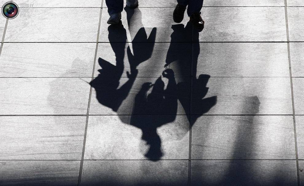 картинки тень на троих пол вполне стандартное