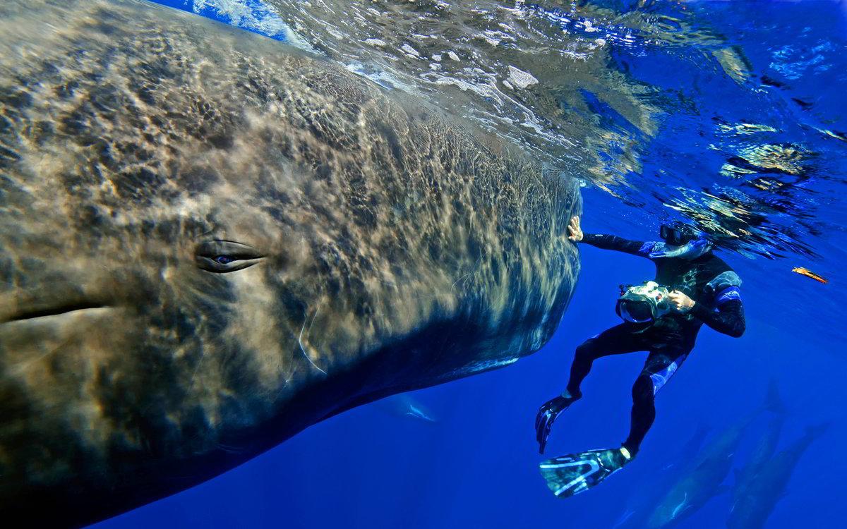 которому фотограф кит фото с людьми самолёт пропал вместе