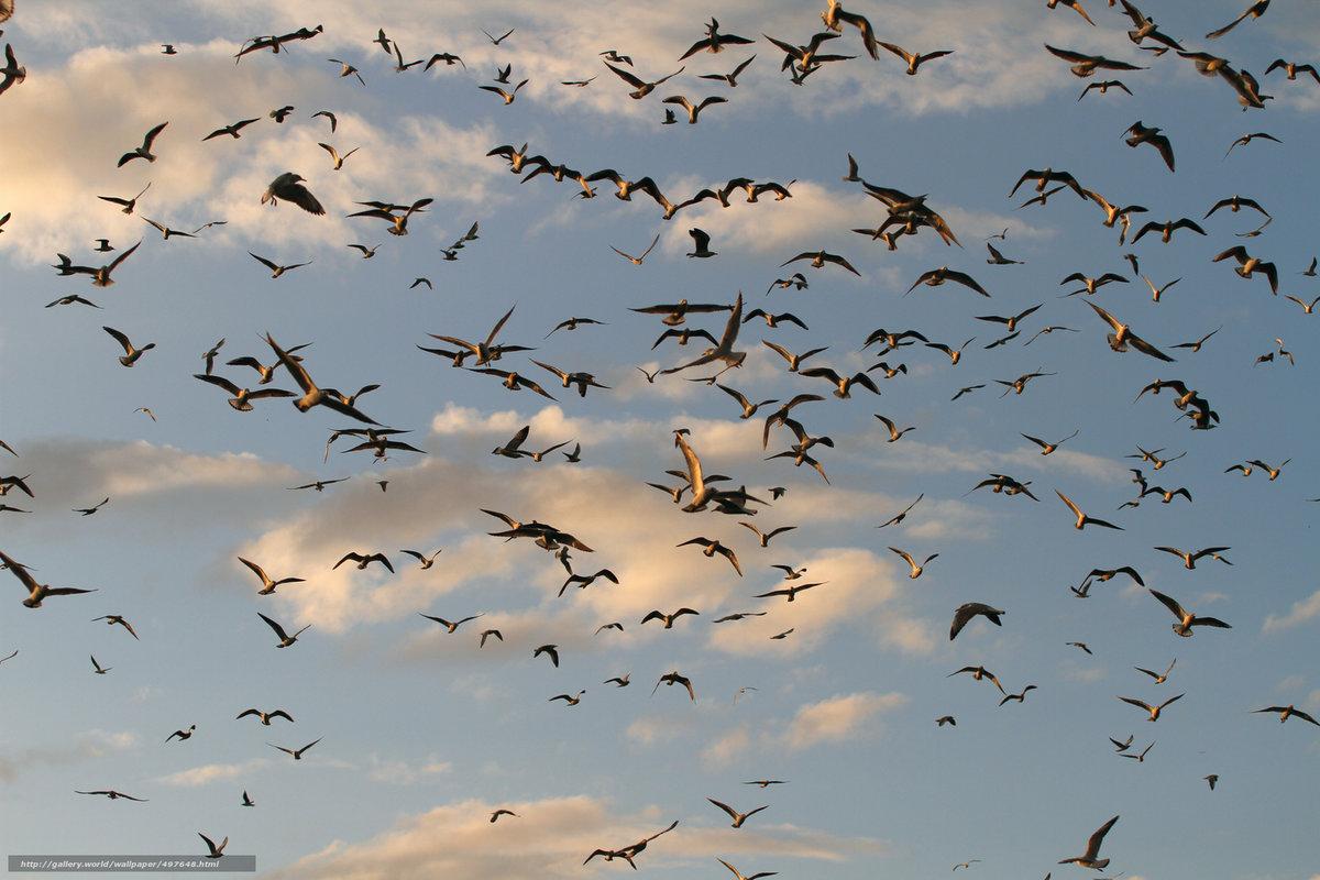 Стаи птиц фото картинки
