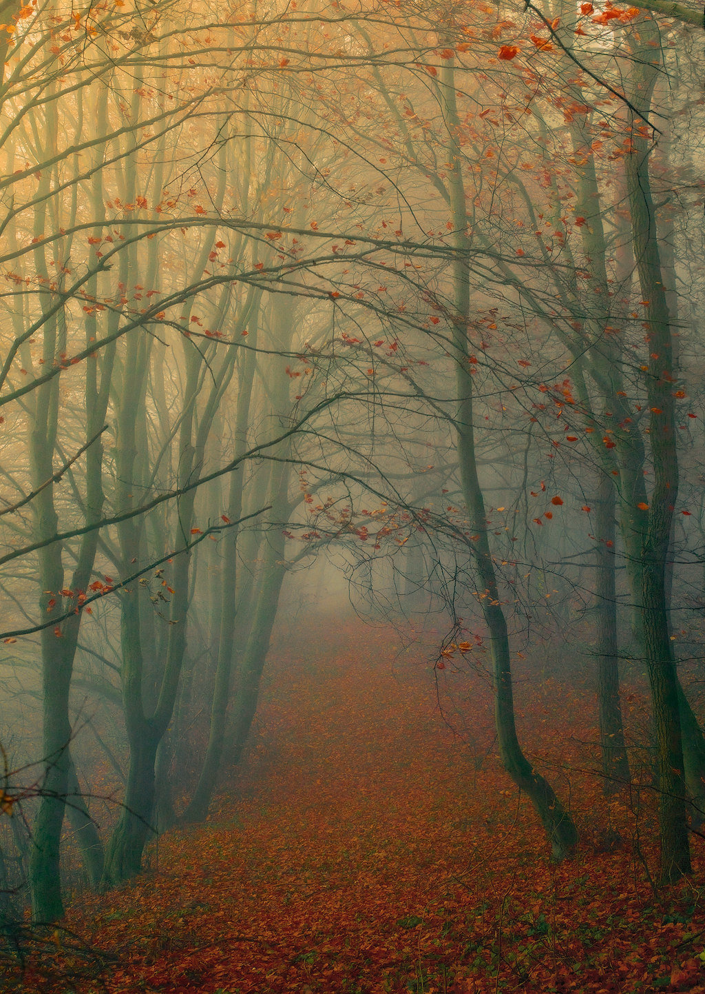Осенний туман в сквере.