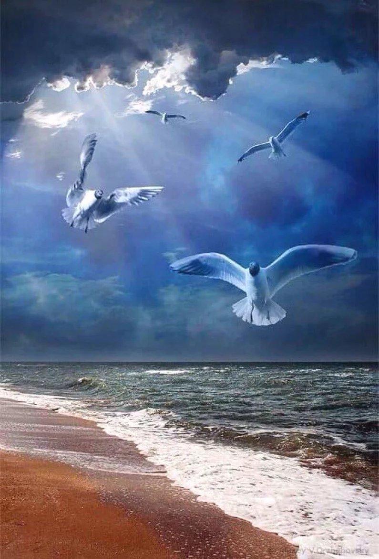Машина, гифка море чайки волны