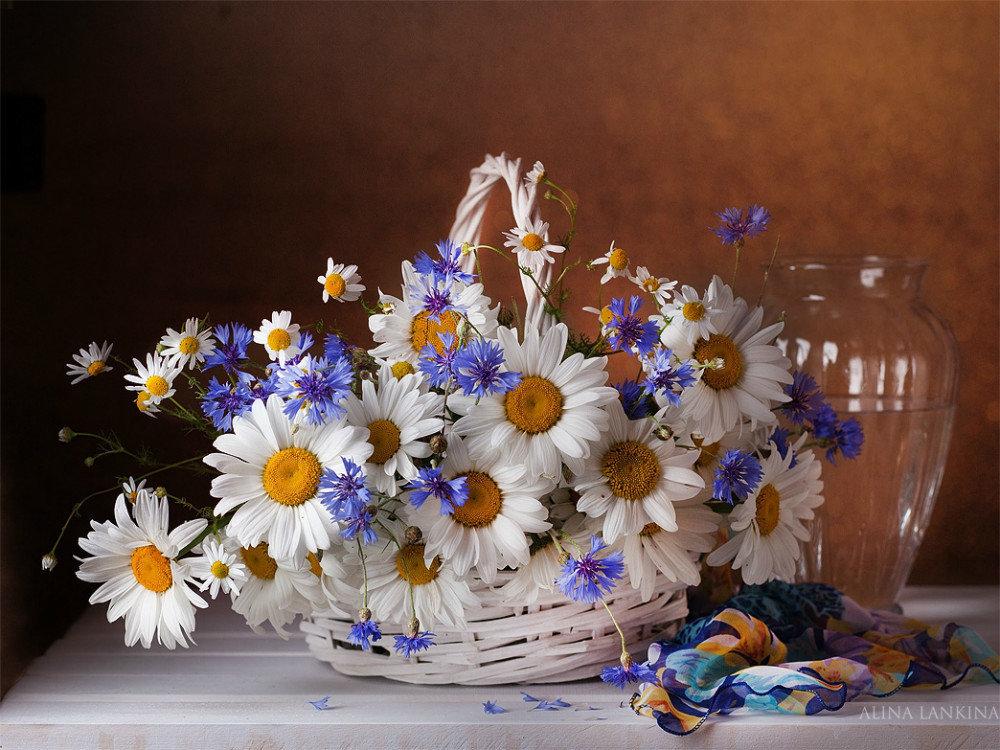 С днем рождения открытки ромашки и васильки