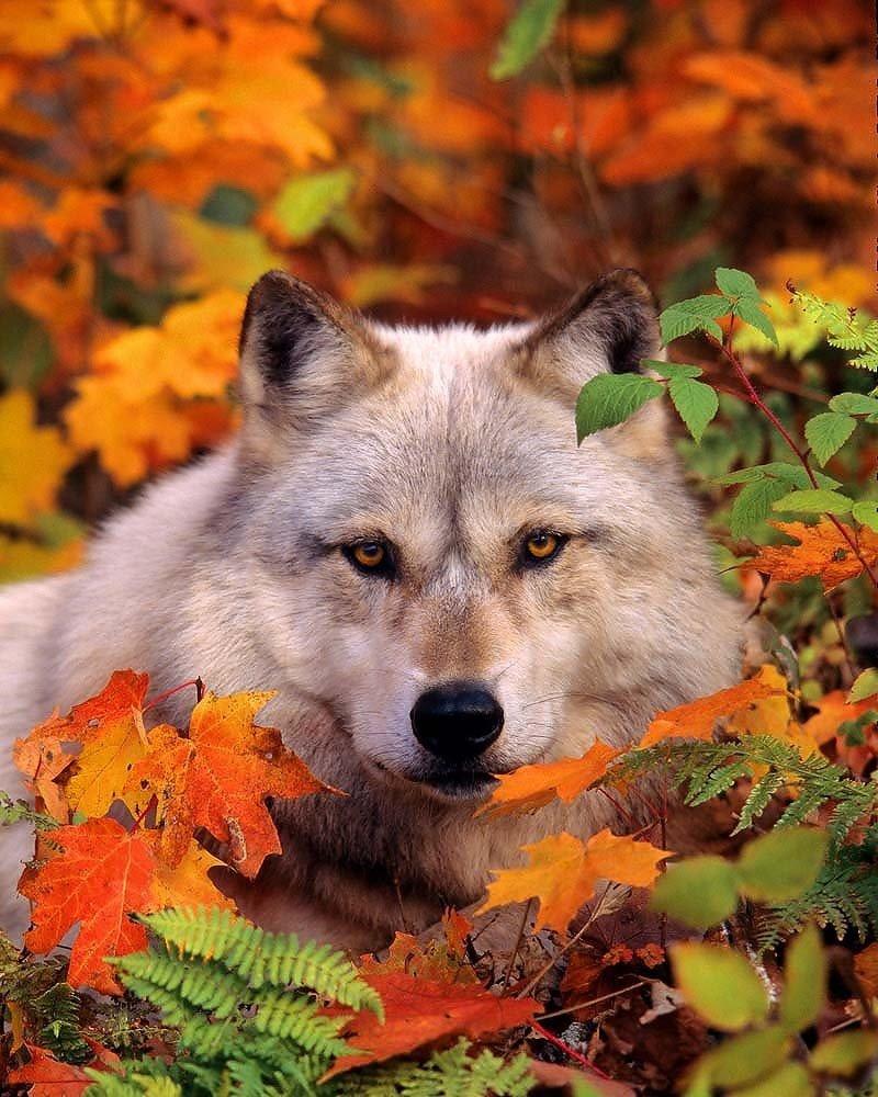 Открытки животные осенью