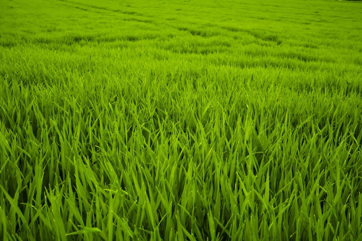 Картинки сочной травы