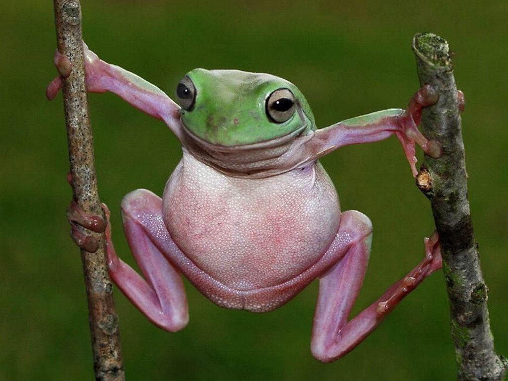 Картинки с надписью лягушки