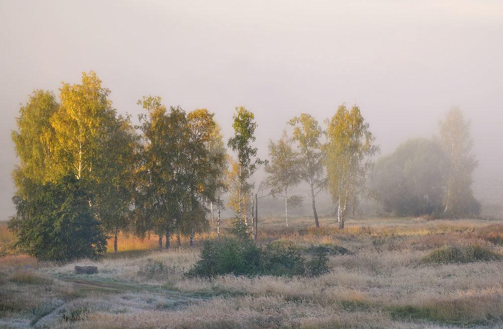Осенний туман в поле