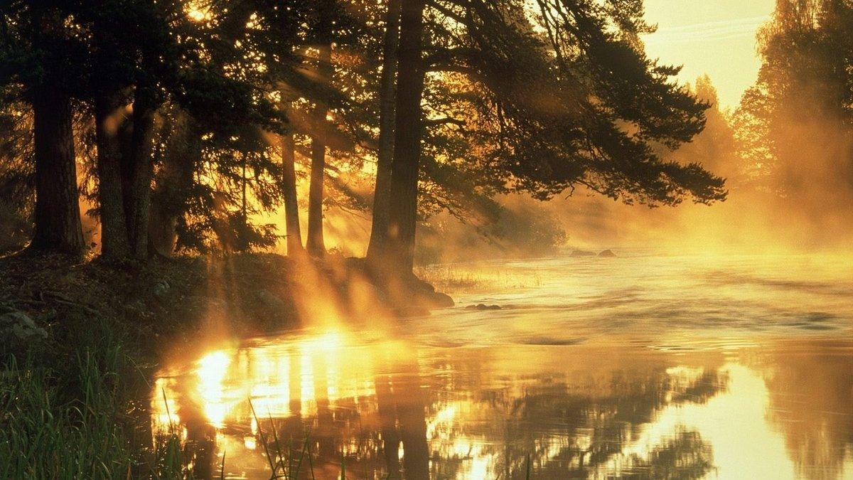 Открытки утро в лесу, днем рождения катюшка
