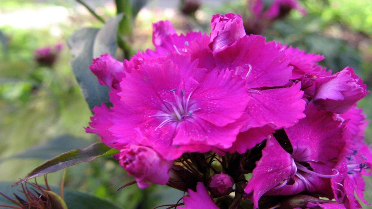 b9177dff81f1 Мир комнатных цветов – для цветоводов-любителей  новости, статьи,  справочники и,