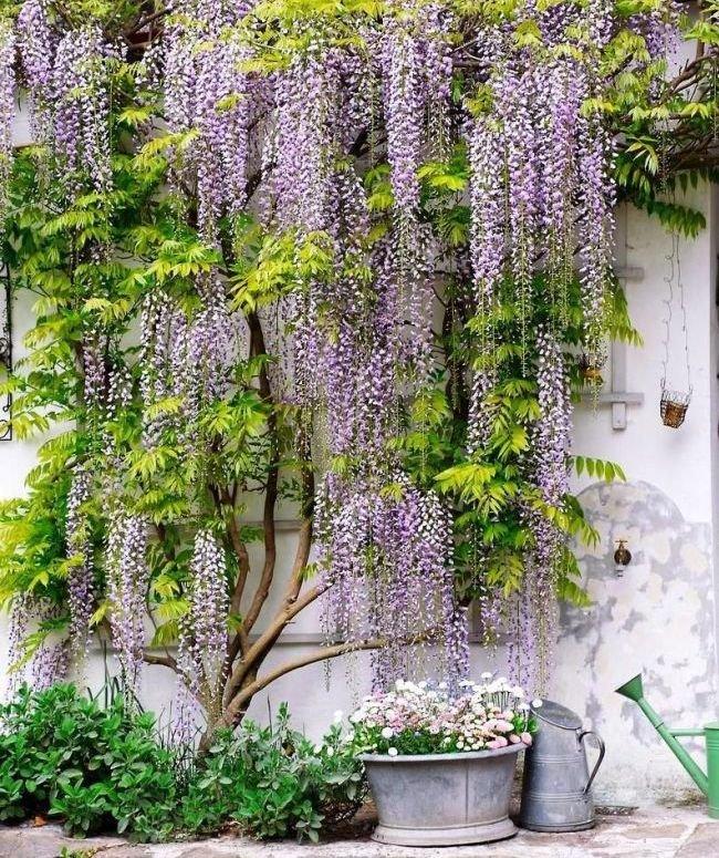 Легендарный цветок Ирис Iris Энциклопедия Материал для