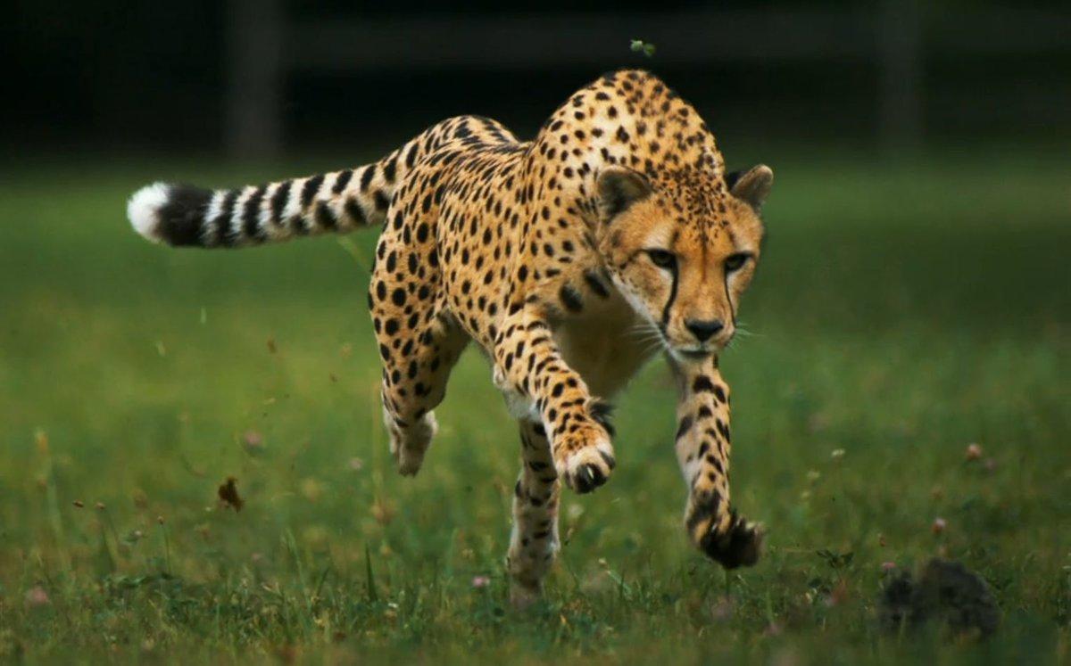 Картинки движущихся животных