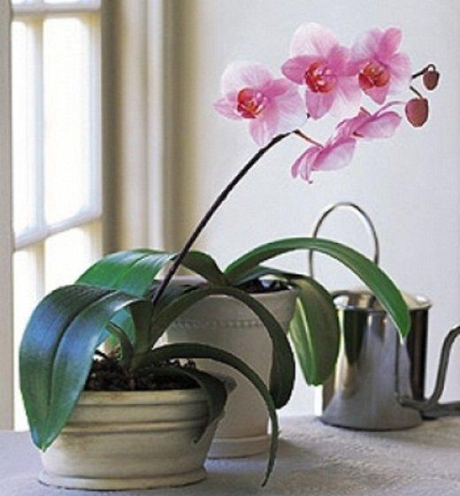 Как украсить кухню комнатными цветами. На кухне мы проводим больше всего времени, создать атмосферу уюта и красоты можно с помощью комнатных растений - цветов.