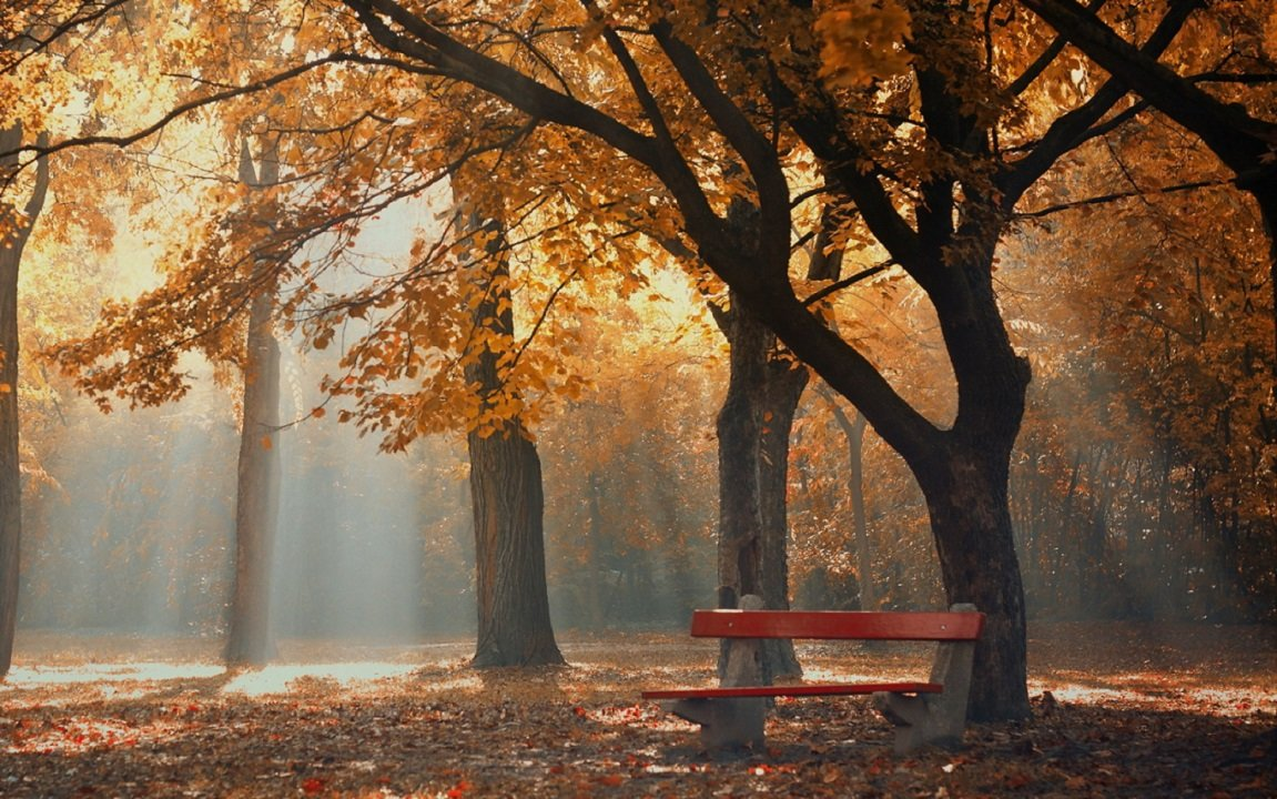 Осенний туман в Ð´ÐµÑ€ÐµÐ²ÑŒÑÑ Ð½Ð°Ð´ лавочкой