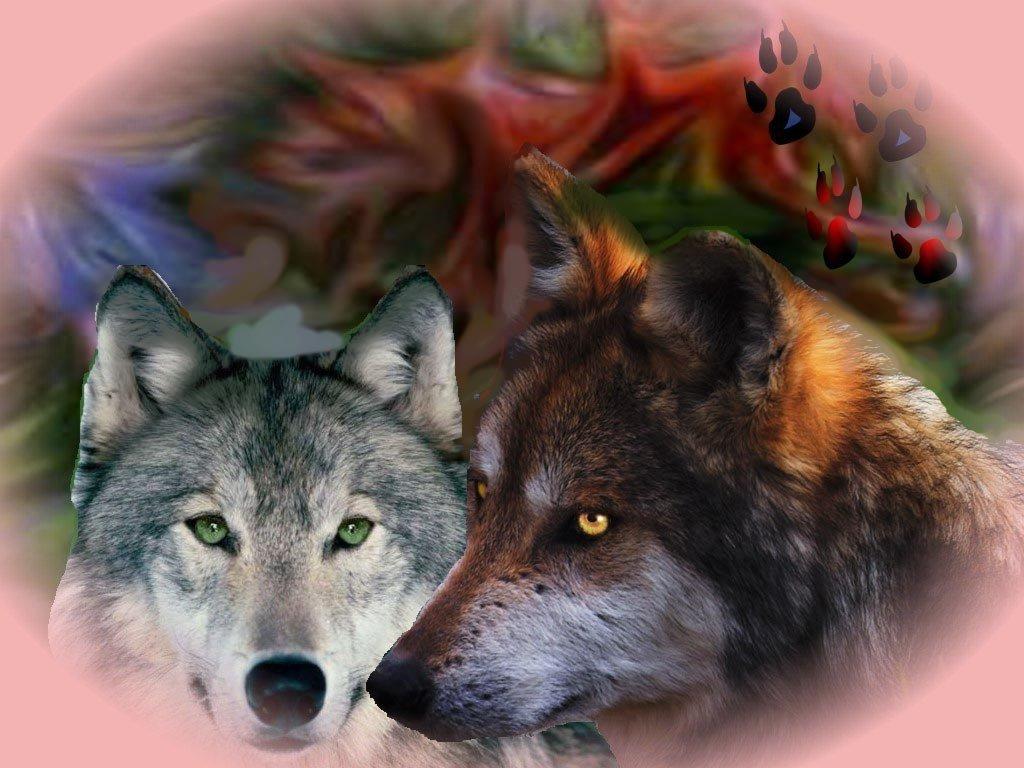 Открытки и картинки с волками, птицы