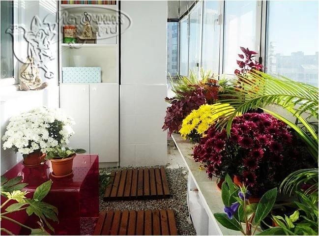 Зимний сад на балконе: устройство своими руками на лоджии, ф.