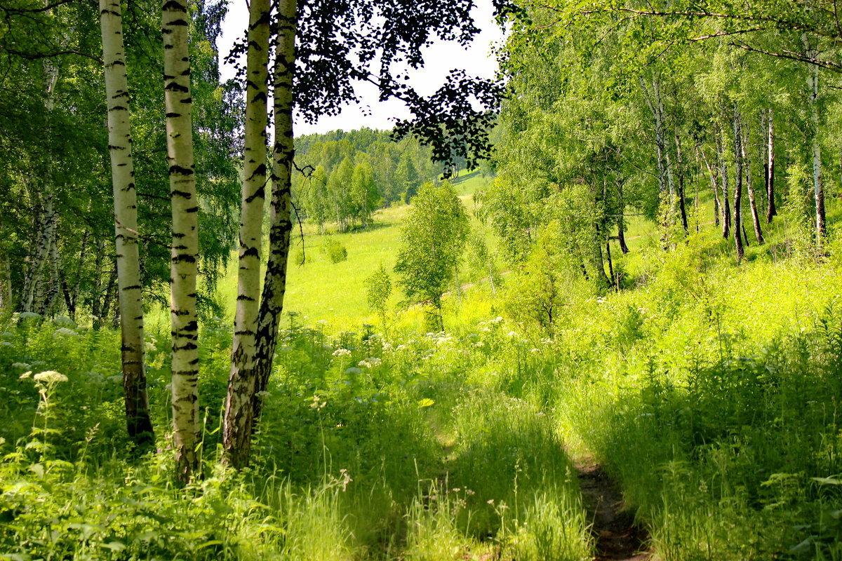 Прикол, картинки природа сибири лето