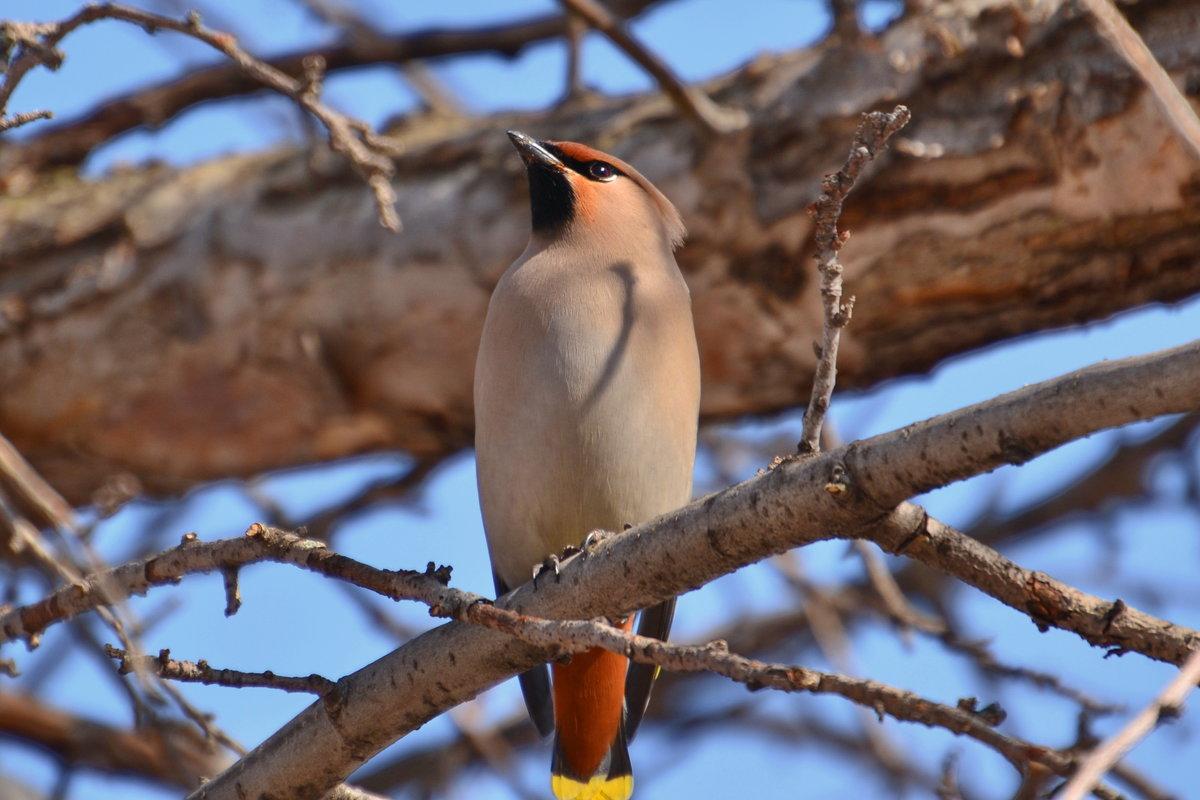 персонаж лесные птицы чувашии фото с названиями можете написать какое-нибудь