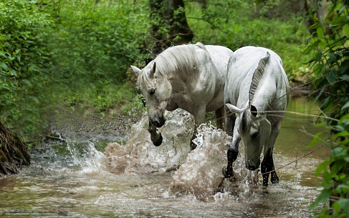Картинки с лошадями в воде