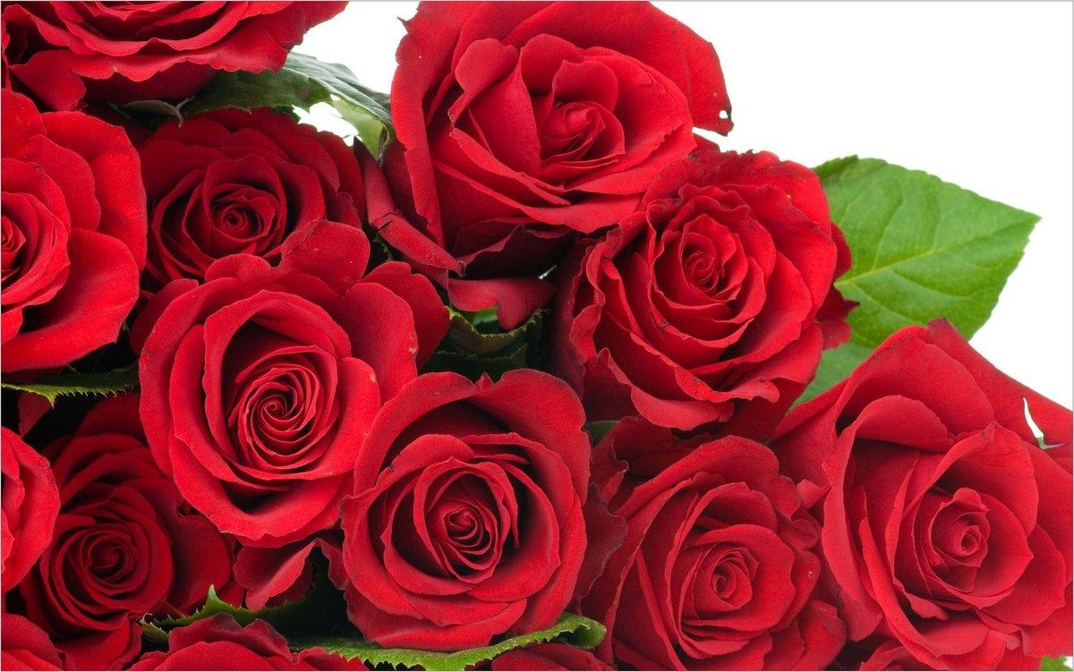 Другу, очень красивые розы открытка