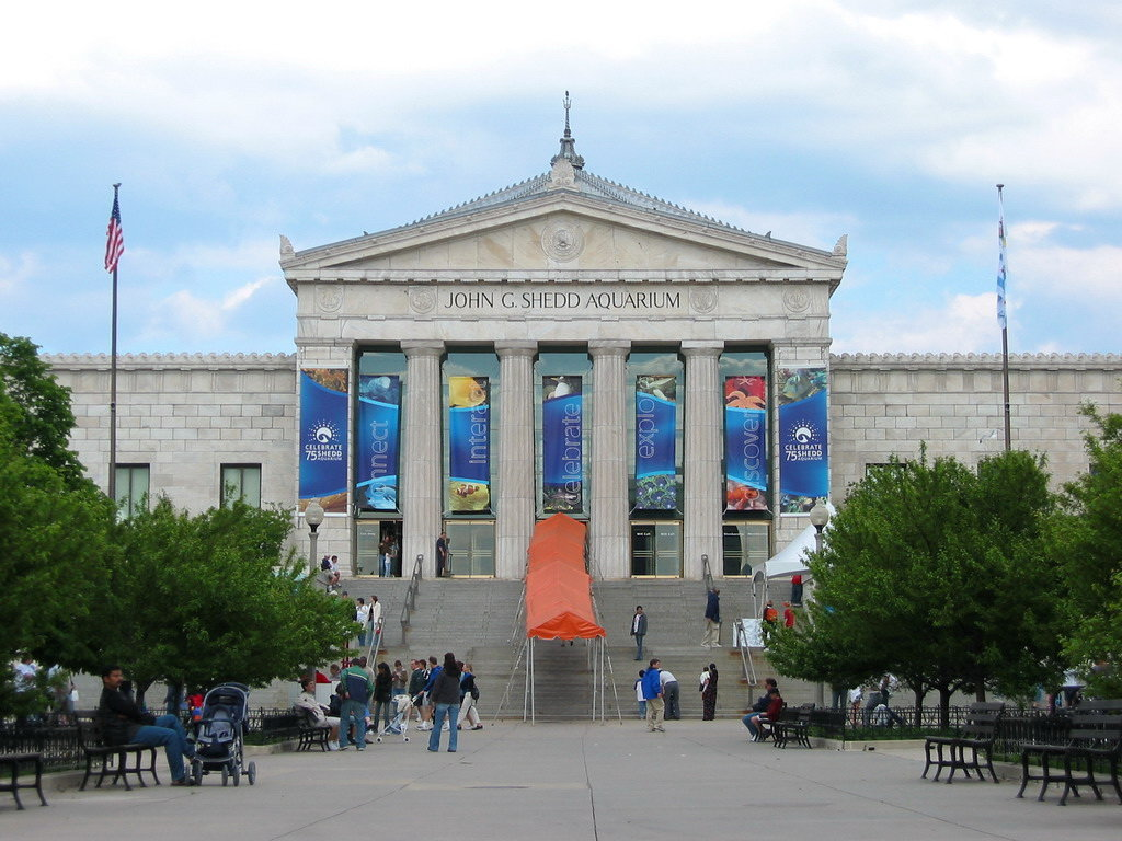 a report from a visit in the sheds aquarium in chicago Nineteen top us aquariums join forces to tackle growing plastic pollution threat facing ocean, rivers, great lakes shedd aquarium in chicago visit: http.