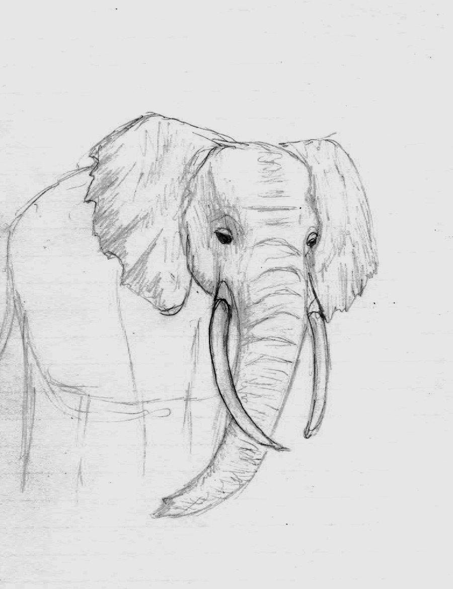 слоники рисунок карандашом чтобы семье