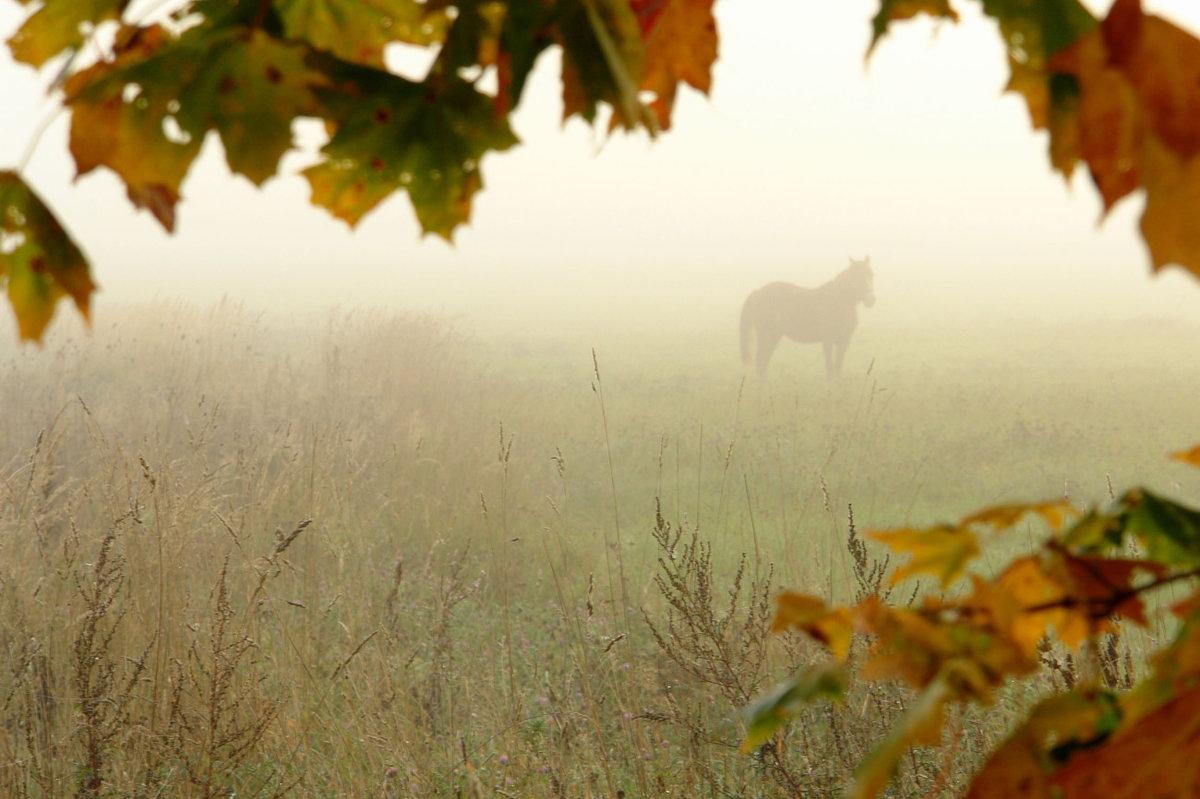 Осенний туман в поле где пасутся лошади