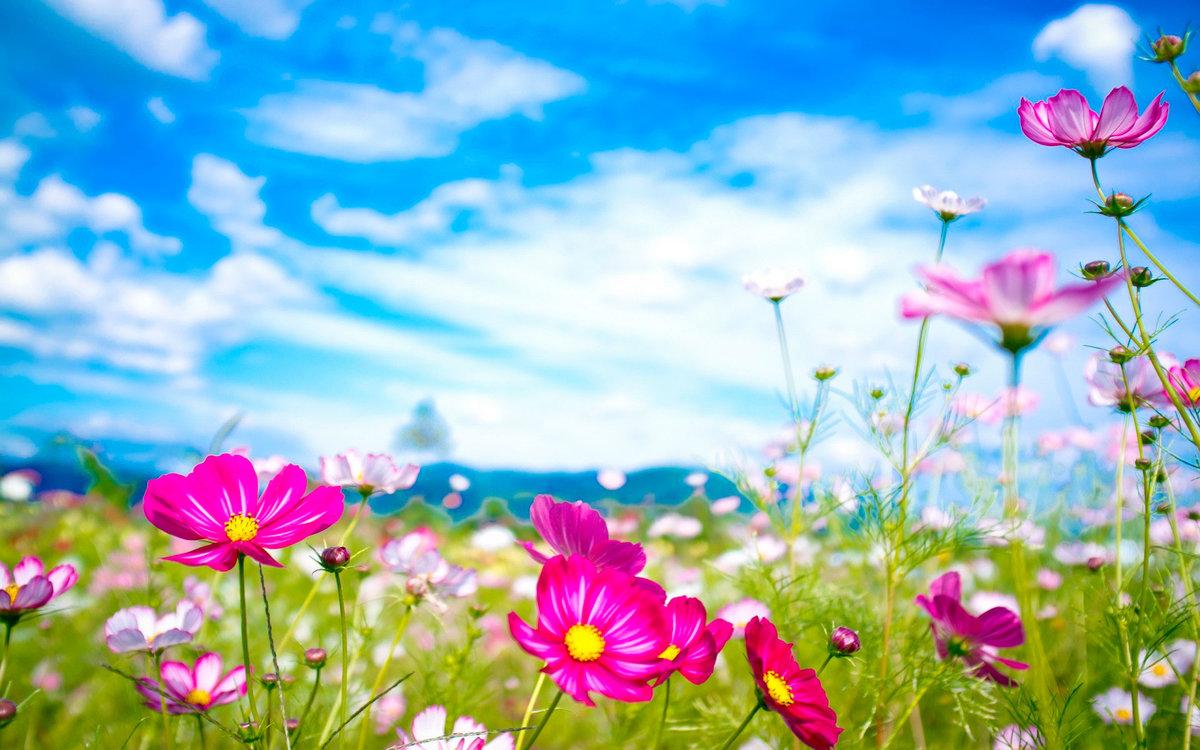 Картинки с поляной цветов