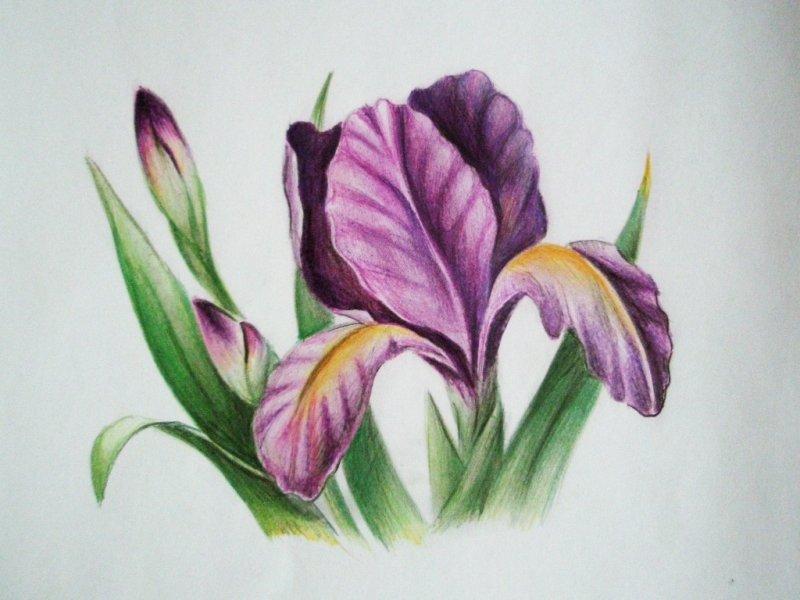 картинки цветные цветы нарисованные