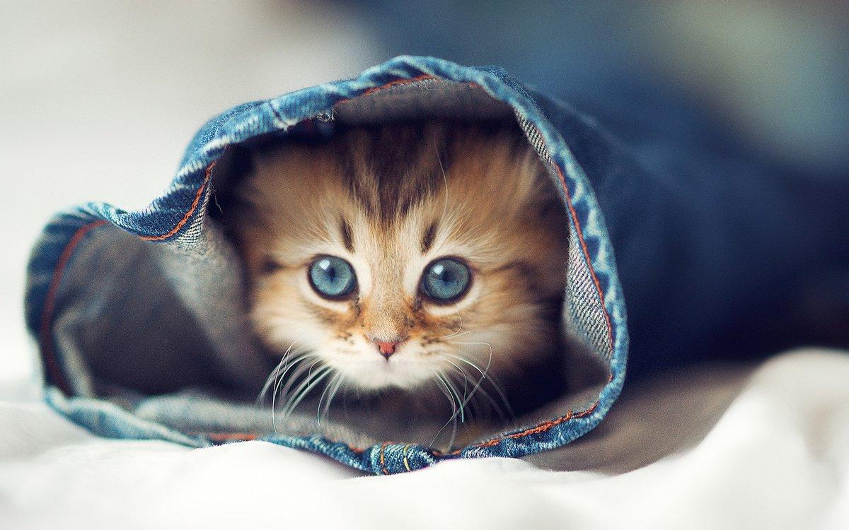 Картинки, картинки милые котики