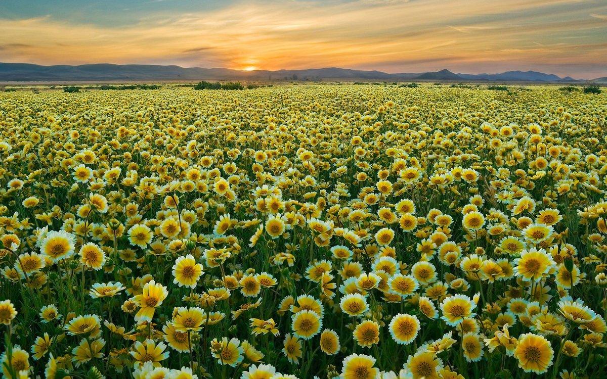 Открытки поля цветов