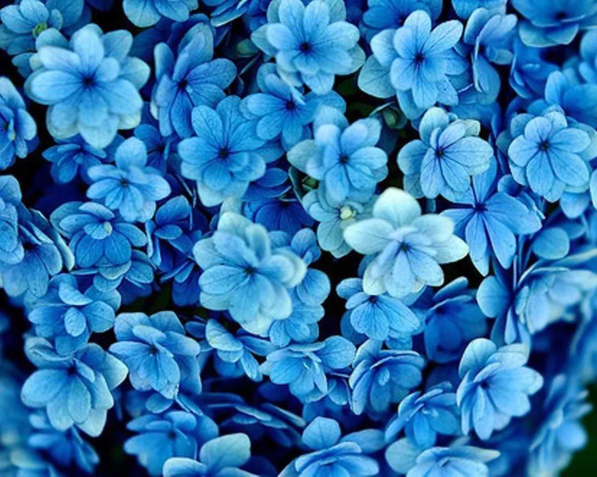 картинка голубого оттенка самых красивых