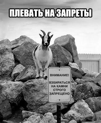 Плевать на запреты   Прикол 24 #смех #мем #прикол #демотиватор #шутка #хохма #юмор